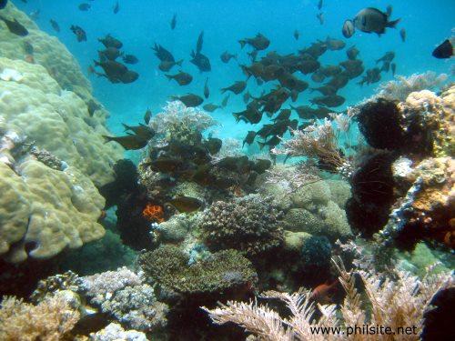 Palawan scuba diving