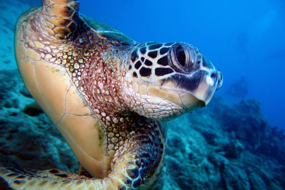Palawan rare species